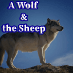 A Wolf & the  Sheep